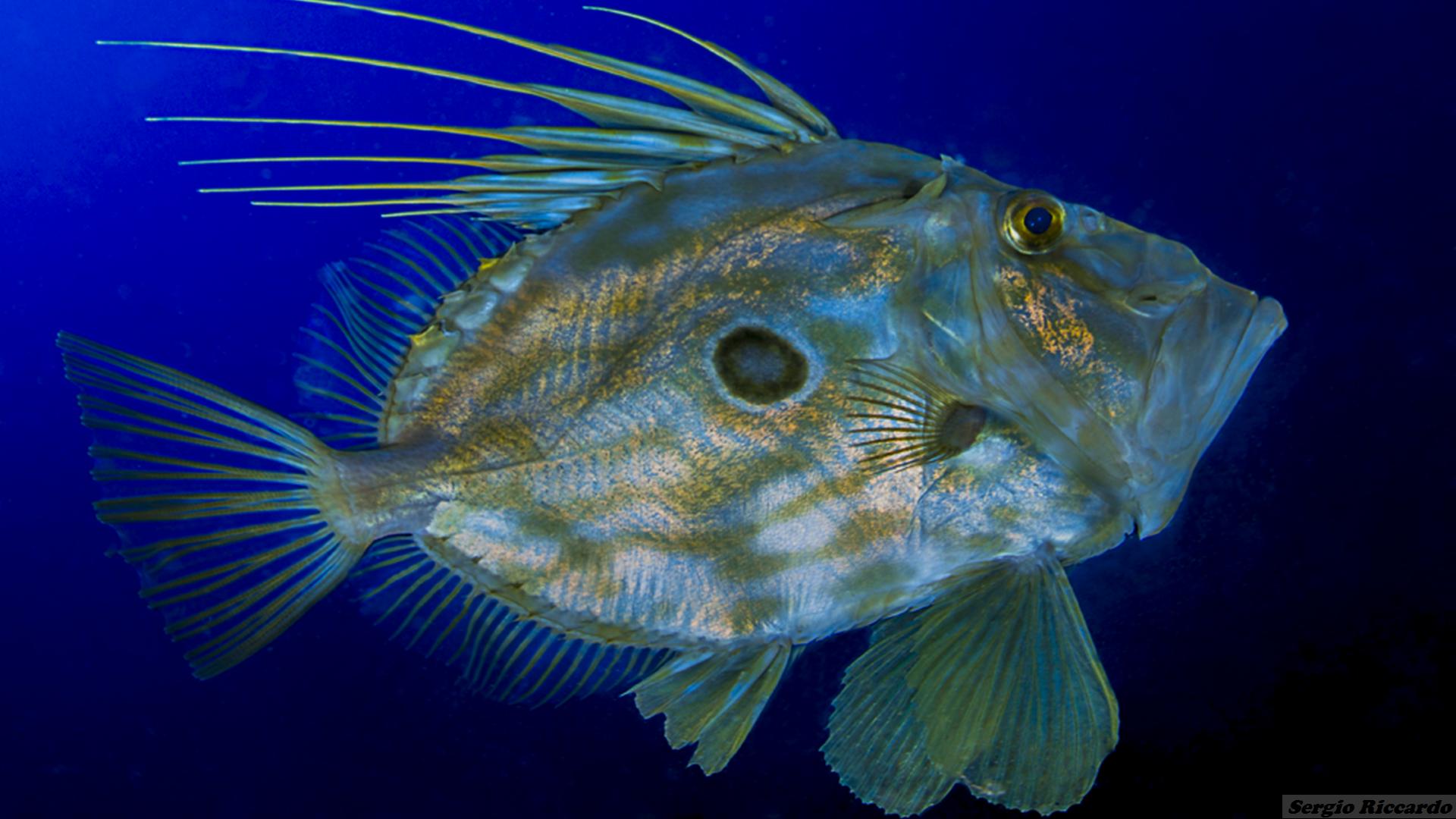 diving marettimo